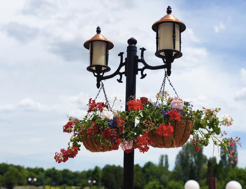 Garden park outdoor lights decor with hanging blooming geranuim. In fresh bright and sunny spring day royalty free stock photo