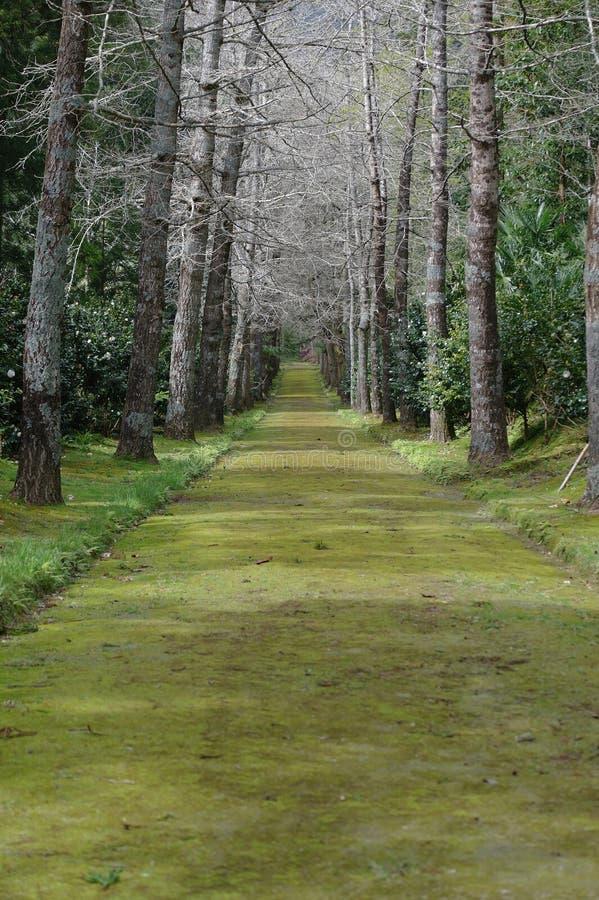 Garden path. A garden path in spring stock images