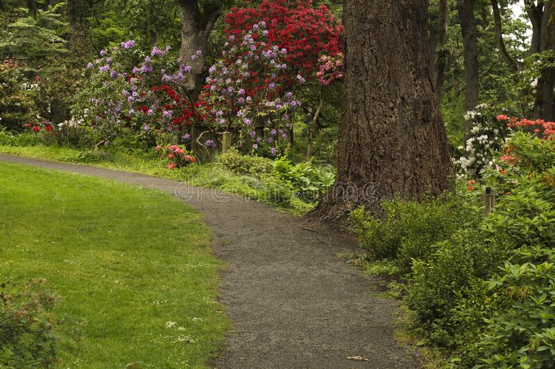 Garden path in a landscaped park stock images