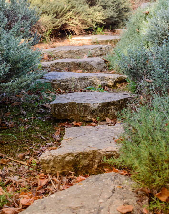 Download Garden path stock photo. Image of plant, leaves, path - 36371204