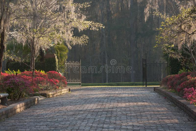 Garden Path in Tallahassee with Azaleas stock photos