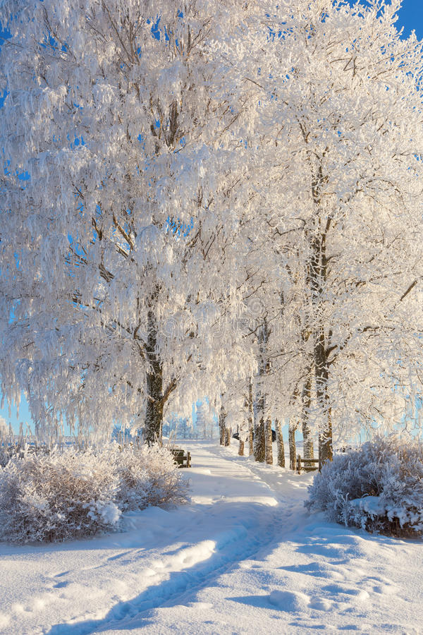 Garden path in winter stock image