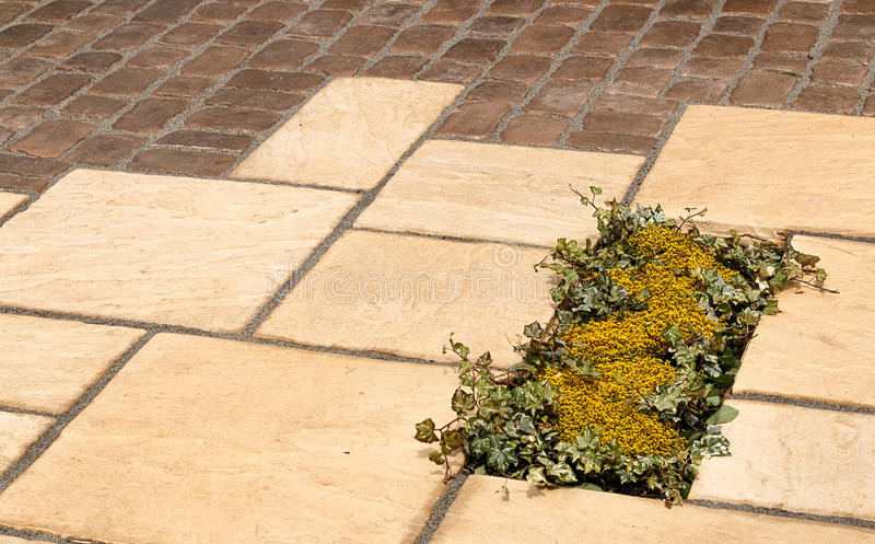Garden paving detail plant inset royalty free stock images