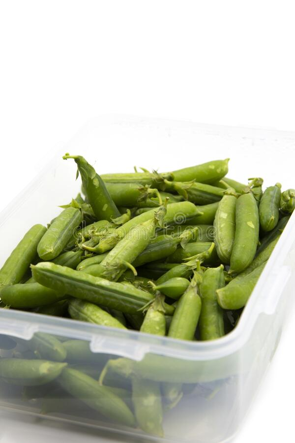 Garden peas in pods freshly picked in a plastic container,  isolated on a white background. royalty free stock photo