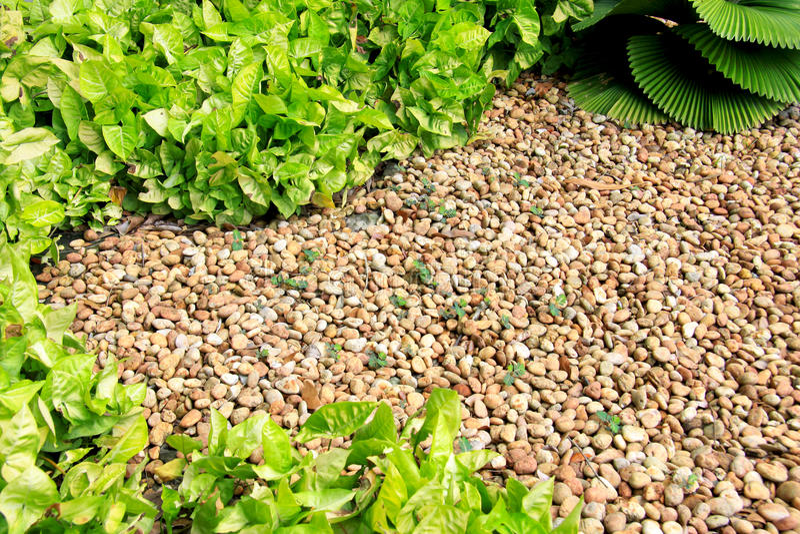 Download Garden pebble stones stock image. Image of palmae, creep - 22198463