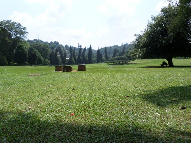 Amazing garden of Sri Lanka royalty free stock photo
