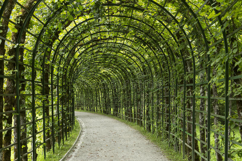 Garden pergola tunnel walkway in park. royalty free stock images