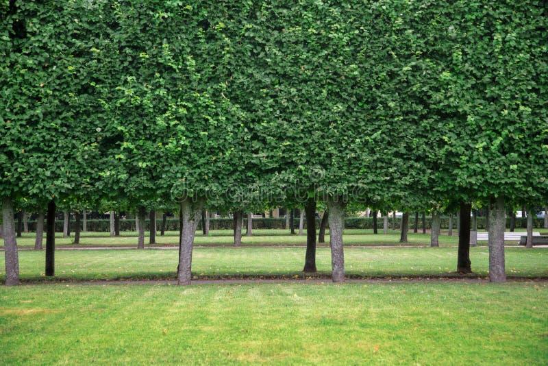 Download Garden in Peterhof stock image. Image of tree, peterhof - 33278773