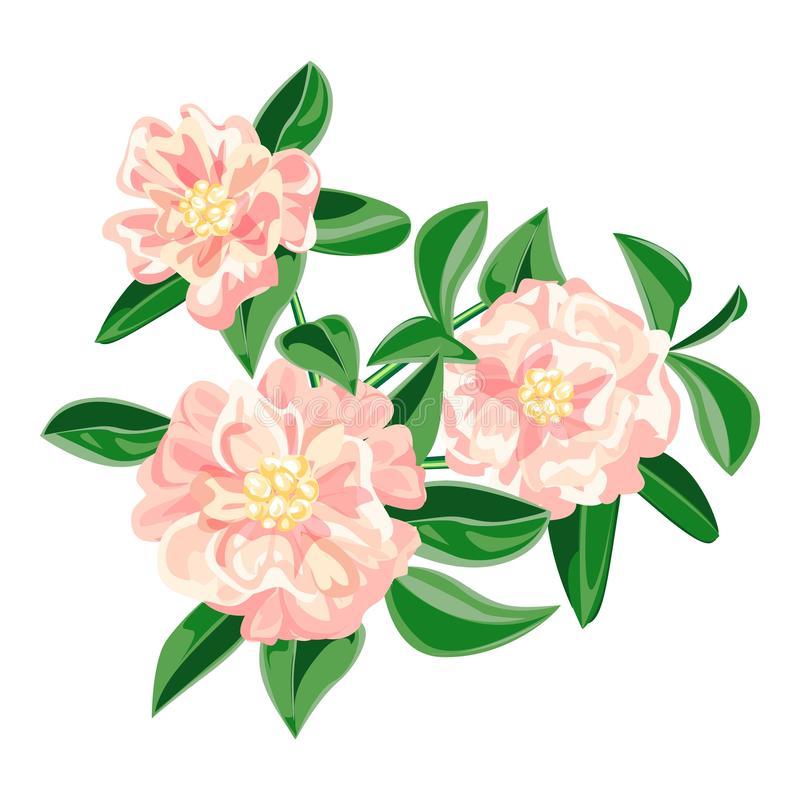 Garden pink camellia icon, cartoon style stock illustration