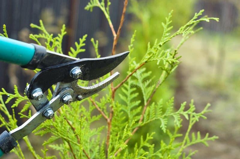 Garden plants cut stock photo