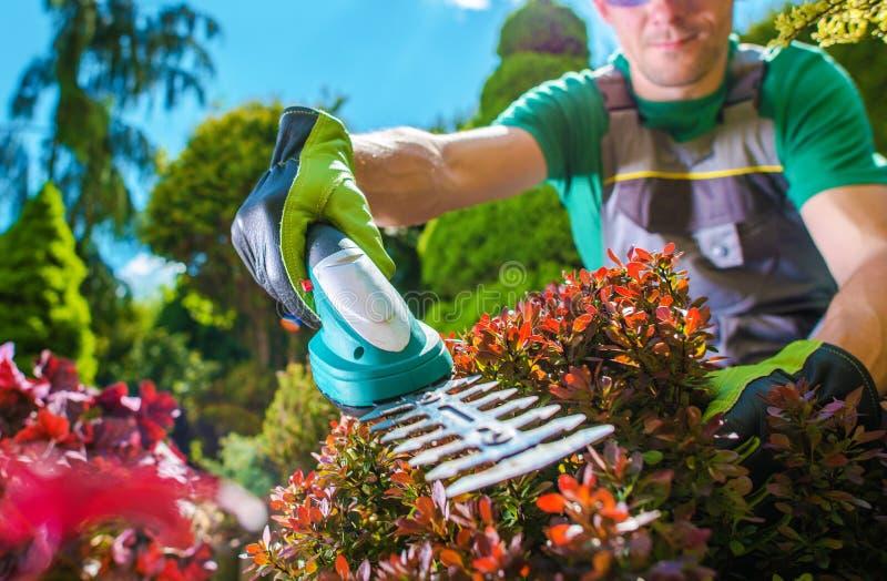 Garden Plants Trimming stock image