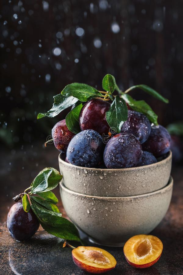 Garden plums on table. Close up of fresh plums with leaves. Autumn harvest of plums. stock photos