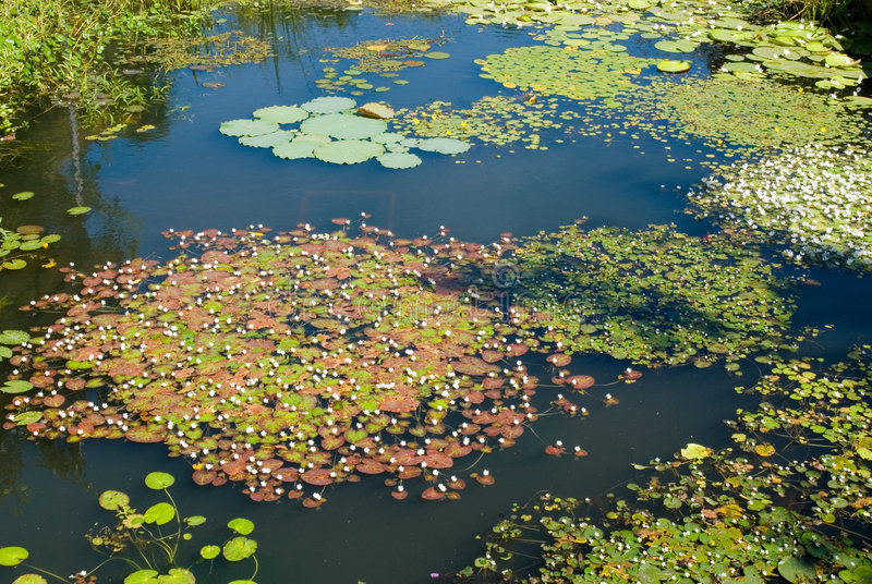 Download Garden pond stock image. Image of flowers, plant, beauty - 8806505