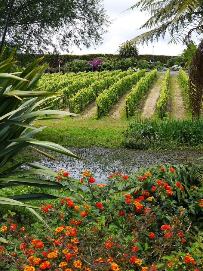 Garden: pond with vines in subtropical garden stock image