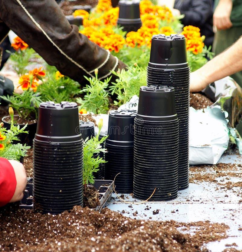 Free Garden Pots Stock Images - 11531444