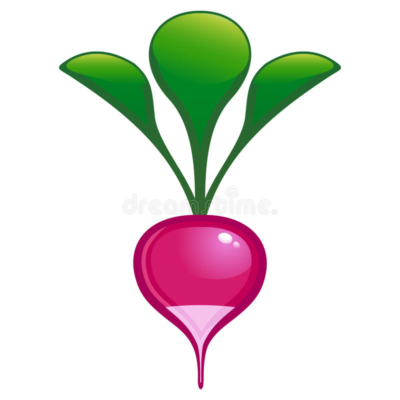 Download Garden radish stock vector. Illustration of object, food - 14758265