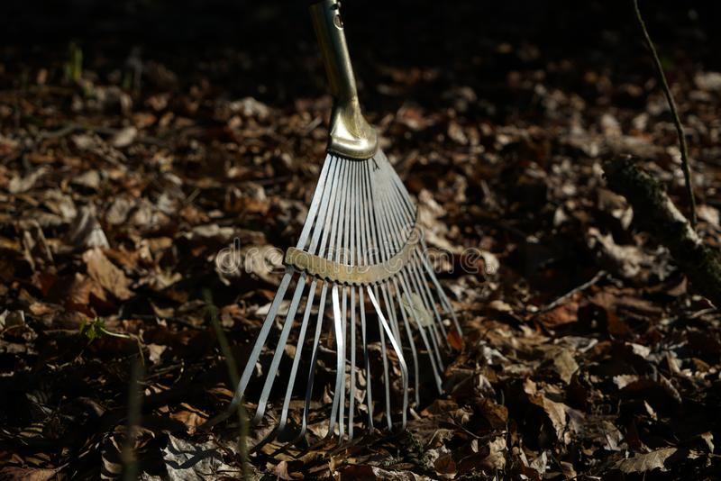 Garden rake is especially helpful in fall foliage leaves stock images