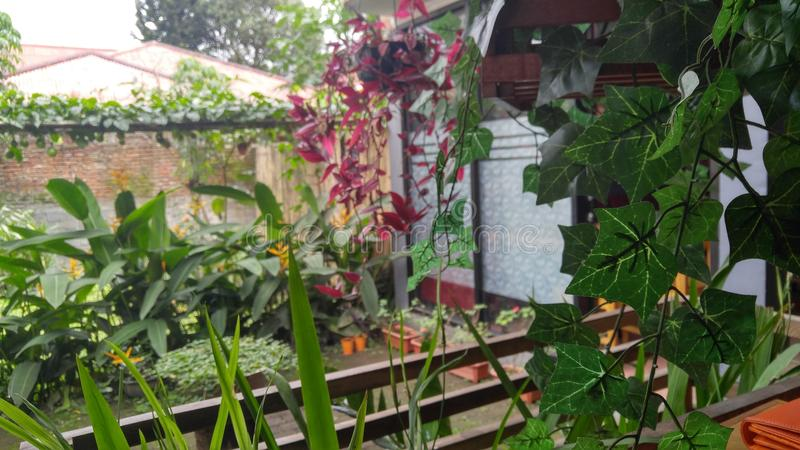 A garden of a restaurant in Tomohon, North Sulawesi royalty free stock image