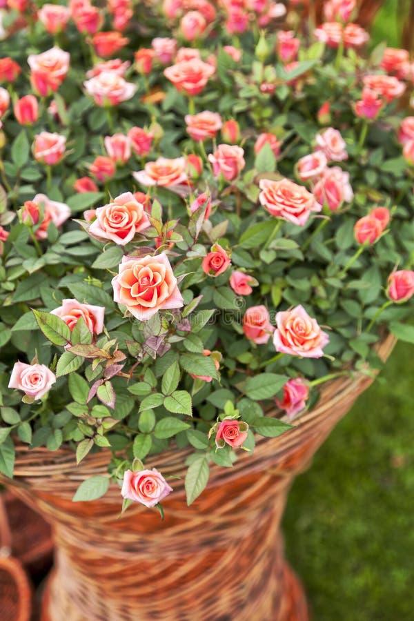 Garden rose bouqet royalty free stock photos