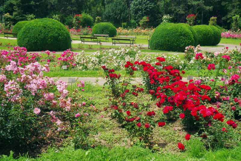 Summer Landscape With Flowers. Garden With Lovely Perfumed Roses In ...