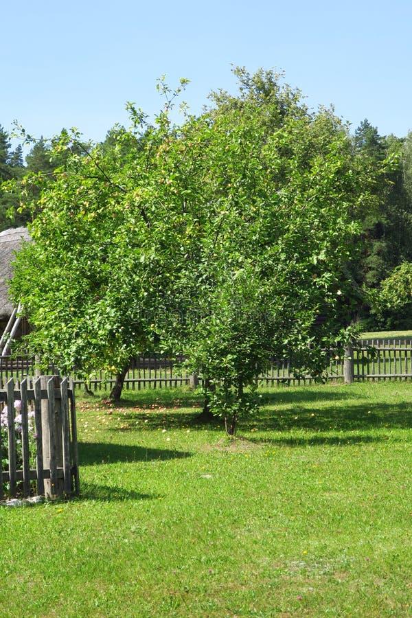Garden in Rumsiskes royalty free stock photo