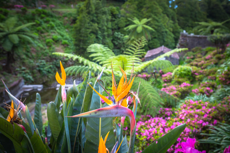 Garden on Sao Miguel island, Azores. It is located in the midst. Of this magnificent water system stock images