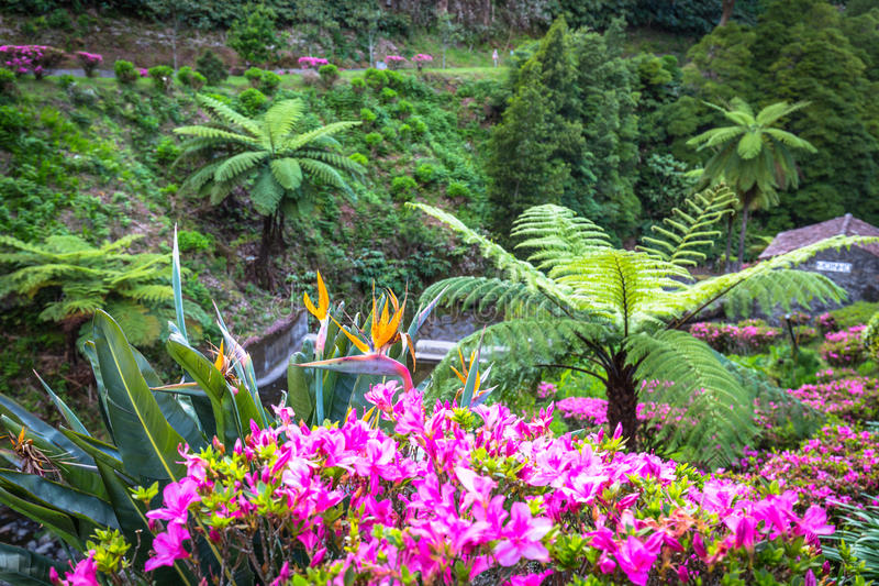 Garden on Sao Miguel island, Azores. It is located in the midst. Of this magnificent water system royalty free stock photography