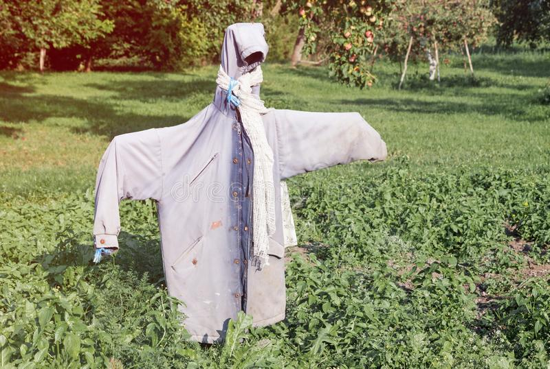 Garden scarecrow made of old clothing standing in the field at summer. Outdoor farm picture royalty free stock images