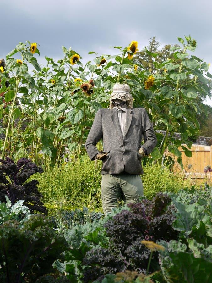 Vegetable garden: scarecrow stock photo