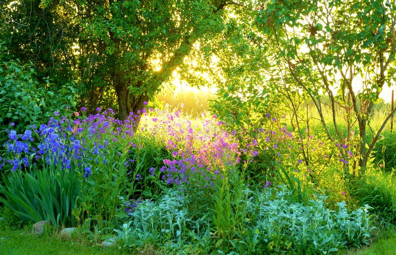 Garden scene with purple flowers and sun setting royalty free stock photo