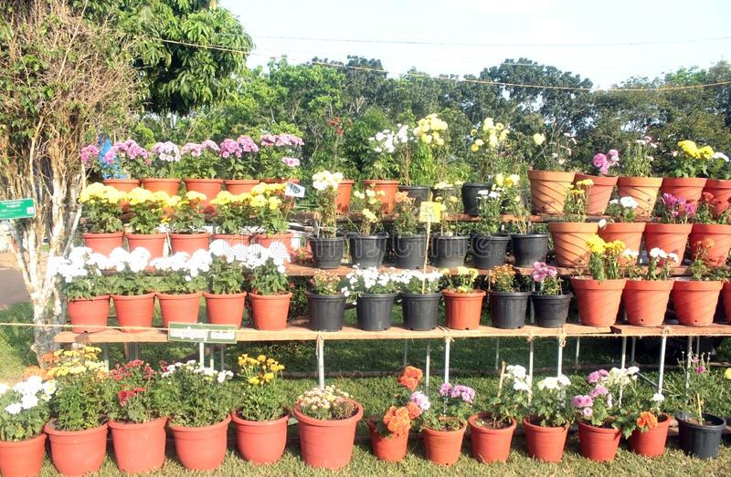 Garden Scenery at Annual Flower Fete. Natural and beautiful garden scenery arranged at an annual winter flower show in India royalty free stock photos