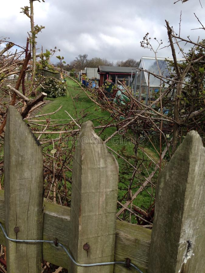 Garden Sheds in allotment stock photography