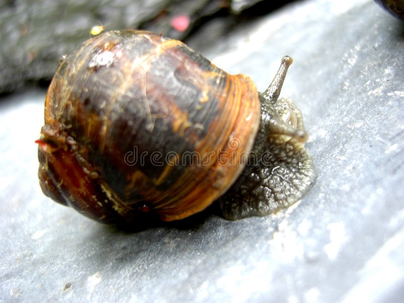Download Garden snail stock image. Image of animals, shell, wildlife - 1933
