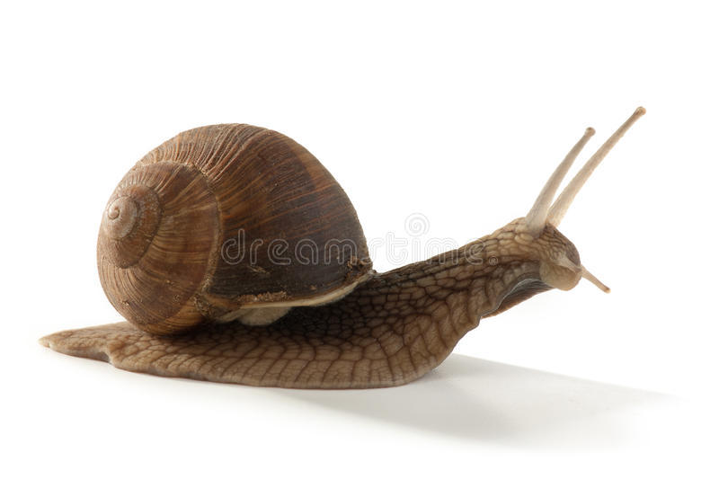 Download Garden Snail Stock Image - Image: 26625901