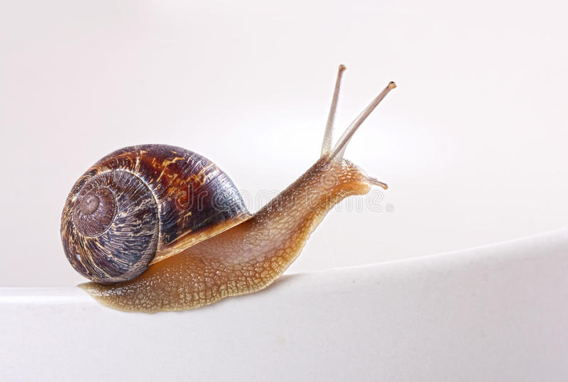 Garden snail. On a curve stock images