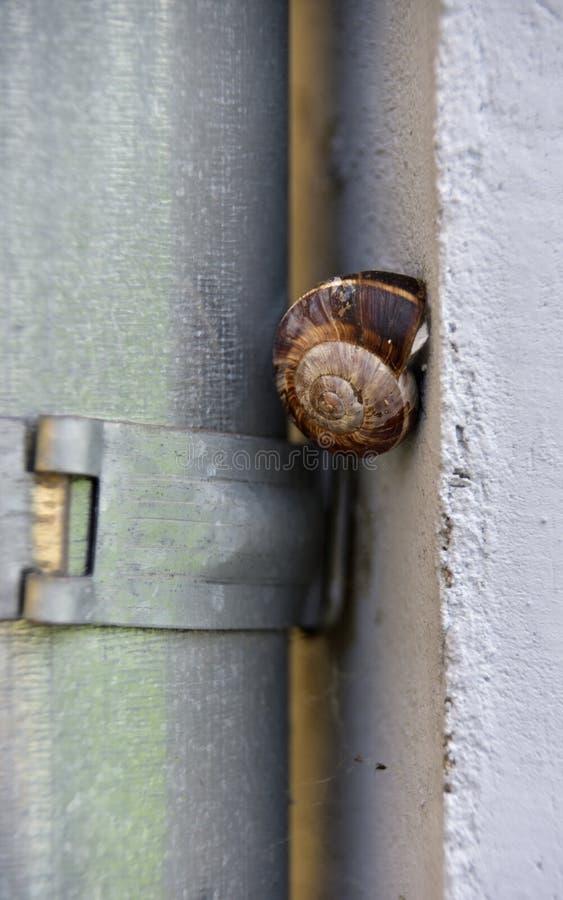 Garden snail on a rough wall stock photos