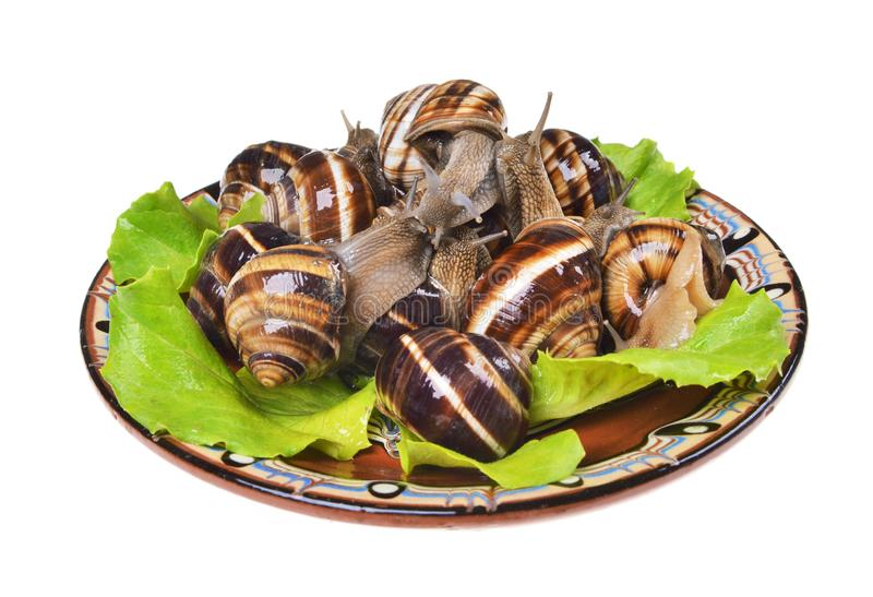 Garden snails,  on a plate, as crude food, a rawism. And as a delicious dish stock photography
