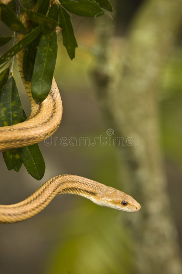 Garden Snake stock photos