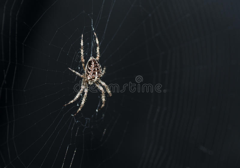 Garden spider. In its spiderweb with black background stock image