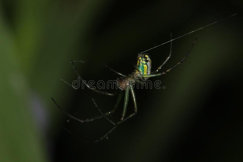 Garden spider on web royalty free stock photography