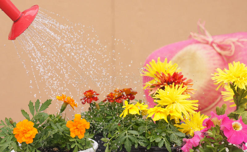 Garden Spray! royalty free stock images