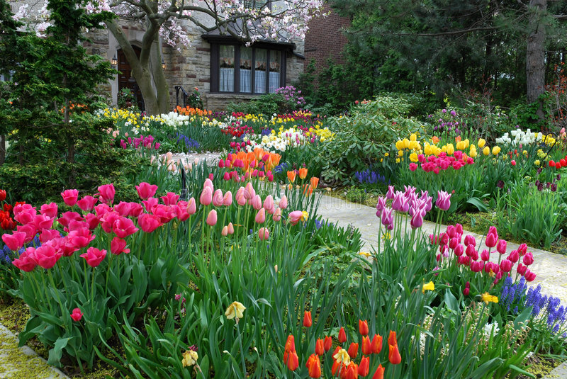 Garden with spring flowers stock photography