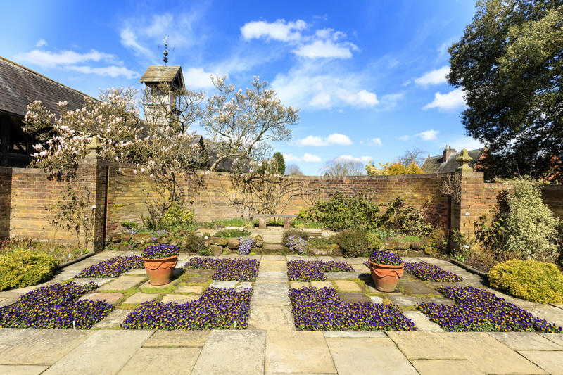 Garden in springtime. Flagged English garden with violas and a magnolia tree royalty free stock image