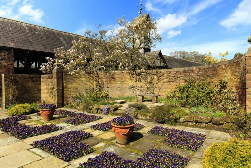 Garden in springtime. Flagged English garden with violas and a magnolia tree stock photography