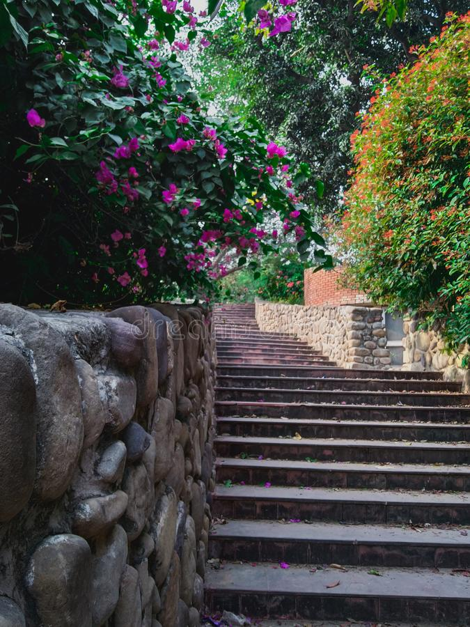 Garden staircase running down in between green plants and bushes with beautiful flowers on them royalty free stock photo