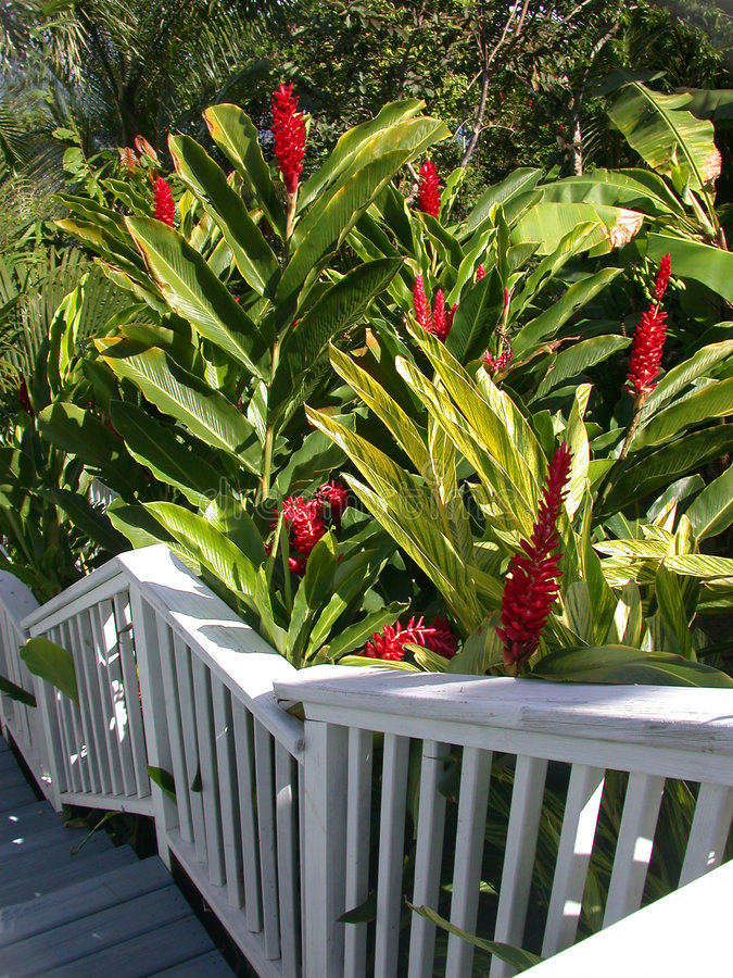 Download Garden Steps Royalty Free Stock Photos - Image: 68918