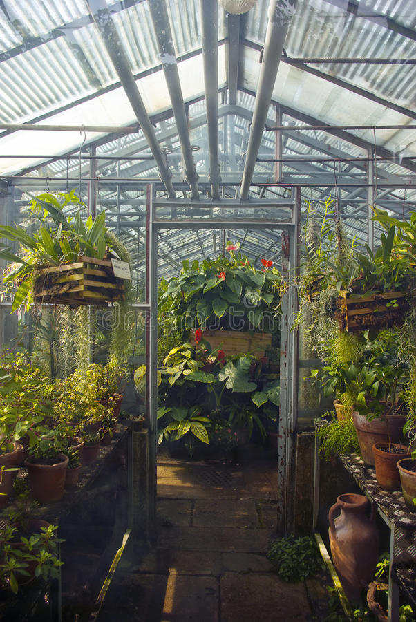 Garden store greenhouse. Interior of a garden store greenhouse with plants stock photo