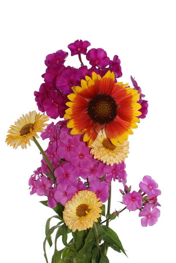 Garden Summer Flowers Royalty Free Stock Photos