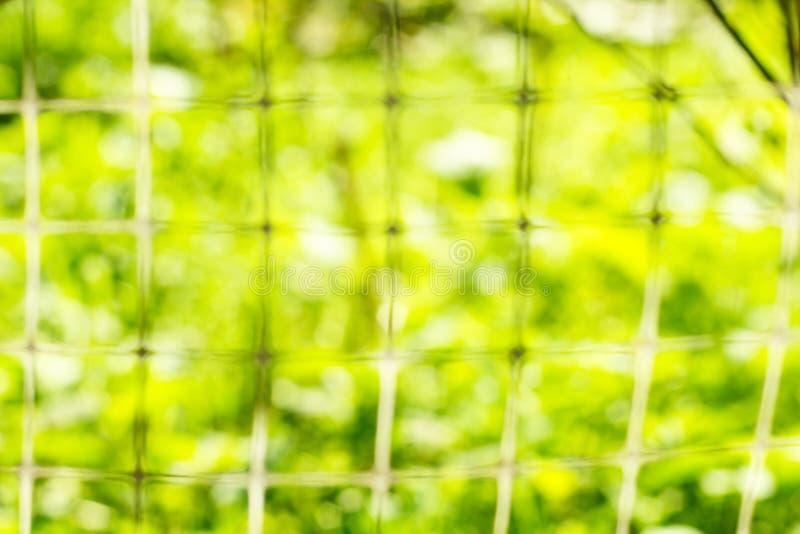 Garden in sunlight' defocus stock photo
