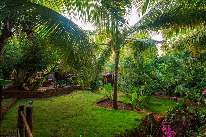 Garden on territory of small hotel typical at South India. 